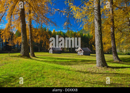 Austria, Europe, Gurgltal, Nassereith, meadows, Stadel, trees, larches, spruces, green, Yellow, blue, sky, nature, - Stock Photo