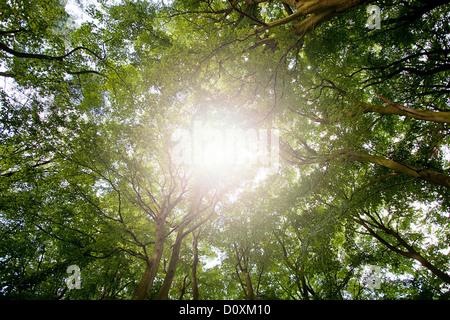 Sunlight through tree canopy - Stock Photo
