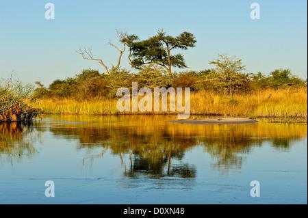 Africa, Bwa Bwata, National Park, Caprivi, Namibia, grasslands, horizontal, savannah, sunny, tree, water, watering - Stock Photo