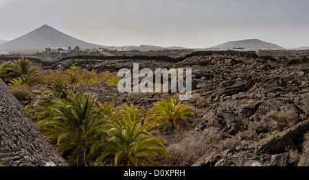 Spain, Lanzarote, Tahiche, Lava field, landscape, forest, wood, trees, summer, mountains, hills, Canary Islands, - Stock Photo