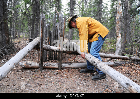 An elder of the Champagne-Aishihik First Nations sets up a deadfall animal trap in the wilderness near Champagne, - Stock Photo