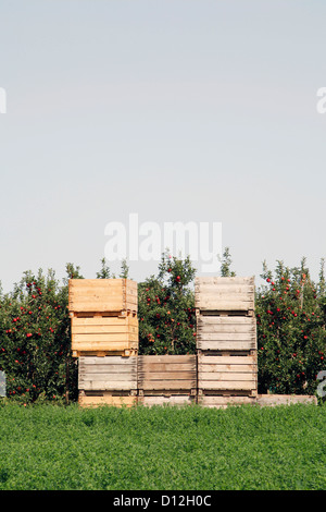 Spain, Catalonia, Apple plantation with wooden boxes - Stock Photo