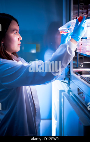 female Asian scientist removing sample from incubator in science laboratory - Stock Photo
