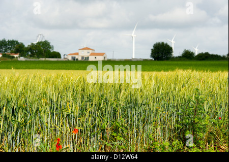 Rye field with farmhouse and wind turbines in west France - Stock Photo