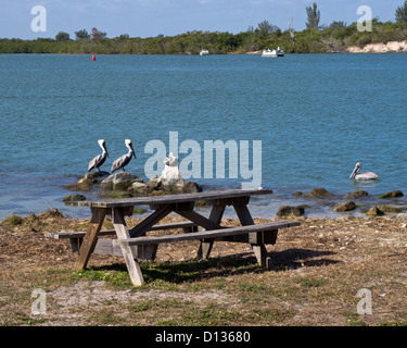 Fishing at sebastian inlet on the east coast of florida for Florida free fishing days
