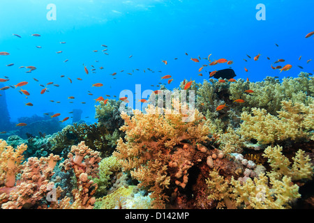 Hard corals and tropical fish on a coral reef Stock Photo ...