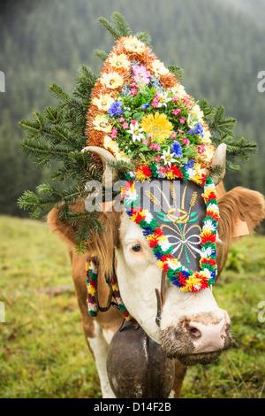 Cow wearing headdress in grassy field - Stock Photo