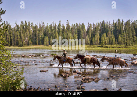 Three horses crossing String Lake - Grand Teton National Park, Wyoming, USA - Stock Photo