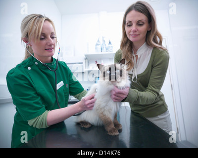 Veterinary nurse examining cat - Stock Photo