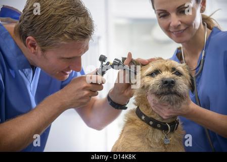 Veterinarians examining dog in office - Stock Photo