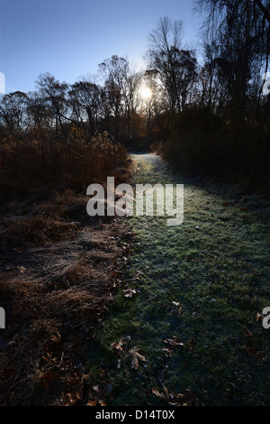 Path Through Forest Lit By Early Morning Sun - Stock Photo