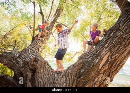 USA, Utah, Lehi, Three kids (4-5, 6-7) playing in huge tree - Stock Photo
