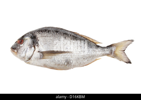 Sea Bream fish isolated against white - Stock Photo