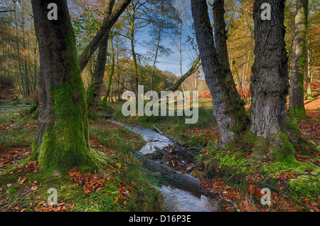 A stream winds its way through mossy Autumn trees in the New Forest. - Stock Photo
