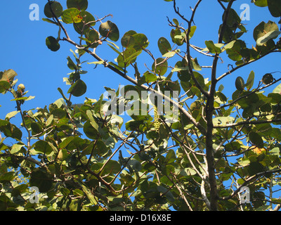 A close shot of leafs of a high tree - Stock Photo