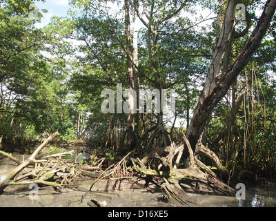 Dry roots in a water - Stock Photo