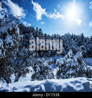 Photo of beautiful snowy forest in the mountains, bright sun shine in blue sky, woods covered white snow - Stock Photo