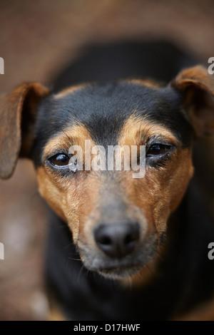 Close up of dog's face - Stock Photo