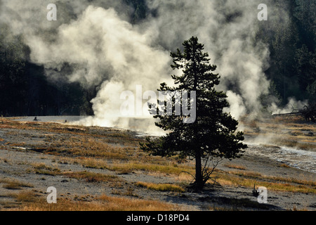 Steam vents along the Firehole River, Yellowstone National Park, Wyoming, USA - Stock Photo