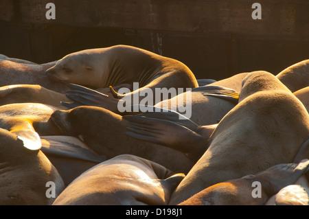 Seals, sleeping, on, dock, - Stock Photo