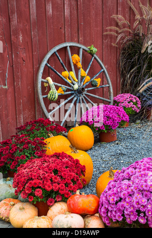 Fall scene with wagon wheel pumpkins and mums in the Finger Lakes region of New York - Stock Photo