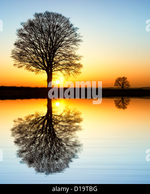 Quercus. Oak Tree sunset silhouette in the English countryside. - Stock Photo