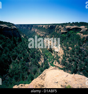 Mesa Verde National Park, Colorado, USA - 'Cliff Canyon' with Utah Juniper and Pinyon Pine Trees - Stock Photo
