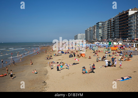 Sunbathers in summer sunbathing behind windbreaks on beach along the North Sea coast at Belgian seaside resort, - Stock Photo