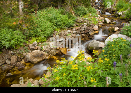 OREGON - Small creek along the Glacier Pass Trail in the Eagle Cap Wilderness area of the Wallowa-Whitman National - Stock Photo