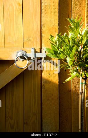 Garden Gate Latch; Garden Gate, Latch And Bay Tree   Stock Photo