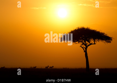 Dusk in the Masai Maria National Reserve with Acacia tree and silhouttes of Zebras, Keya, Africa - Stock Photo
