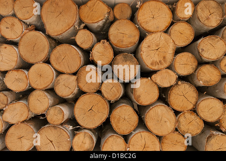 Birch wood logs stacked up ready for a fireplace. - Stock Photo