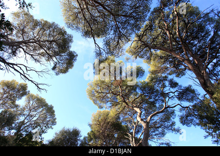 The natural park of Mont Boron in Nice city - Stock Photo