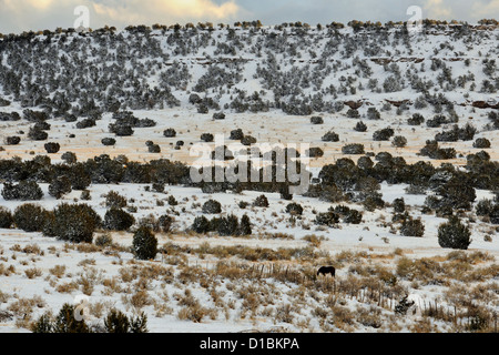 A dusting of snow in the Cibola National Forest, with grazing horse, near Mountainair, New Mexico, USA - Stock Photo