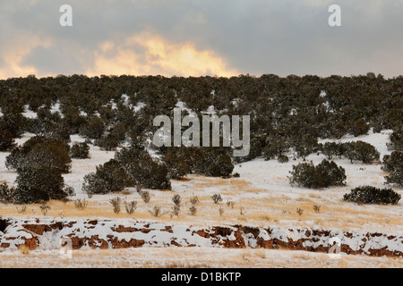 A dusting of snow in the Cibola National Forest, near Mountainair, New Mexico, USA - Stock Photo