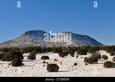 Pinyon Pine and junipers in the Cibola National Forest with fresh snow, near Magdalena, New Mexico, USA - Stock Photo
