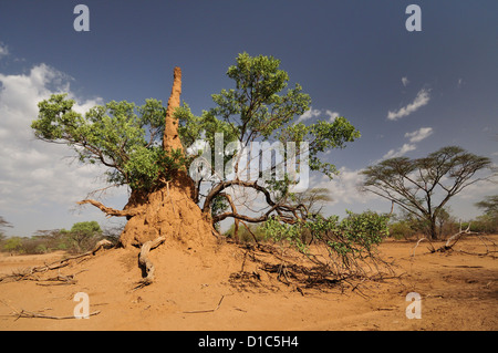 Termites' nest, Karo tribe land, Omo River Valley, Ethiopia, Africa - Stock Photo