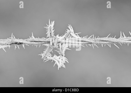 Taken early dawn during a Hoar frost. The contrast of continuous metal barbed wire and scattered ice spikes was - Stock Photo