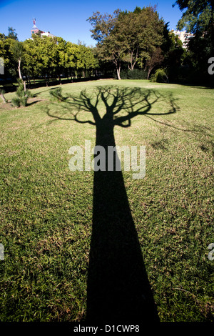 Seville, Spain, the shadow of a leafless tree - Stock Photo