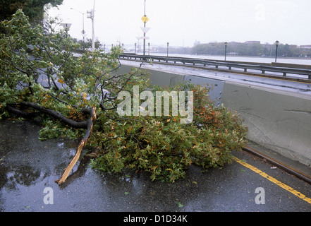 Fallen Tree on FDR Drive Hurricane Sandy Damage and empty roadway.  New York City - Stock Photo