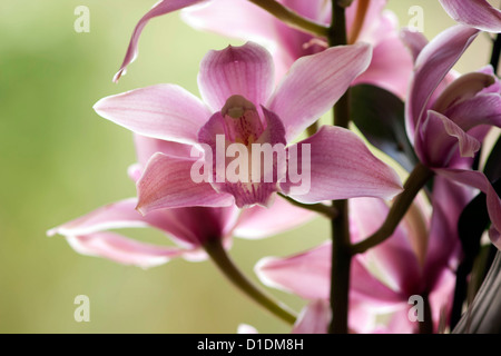 Bunch of pink flowers. Colorful flowers bring breath of freshness in a house or an office - Stock Photo