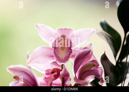 Colorful flowers bring breath of freshness in a house or an office - Stock Photo