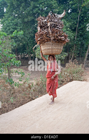 Village woman in red sari carrying basket of dry palm leaves on her head, Ballia, rural Orissa, India, Asia - Stock Photo