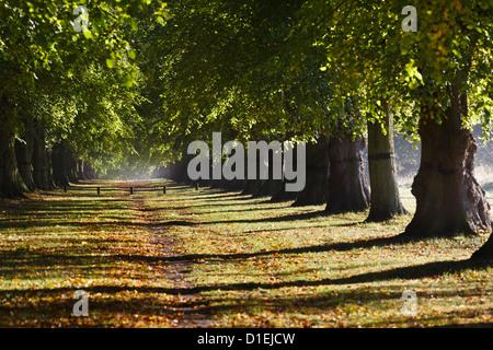 The Lime Tree Avenue, Clumber Park, Nottinghamshire - Stock Photo