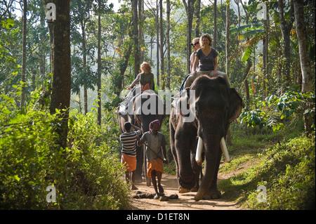 Horizontal portrait of Western tourists riding Indian elephants on a trek through the jungle in Kerala. - Stock Photo