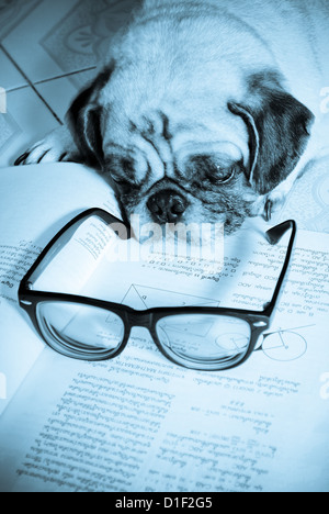 Dog Fell Asleep while doing her homework - Stock Photo
