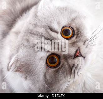 Cat Looking at the Camera and Waiting Miracle - Stock Photo