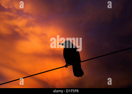 crow standing on a wire - Stock Photo