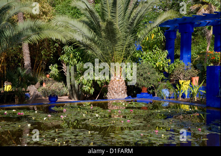 Tropical palms surrounding an pond containing water lilies at the Majorelle Garden in Marrakech, Morocco, North - Stock Photo