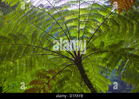 Palm tree forms a feathered green umbrella